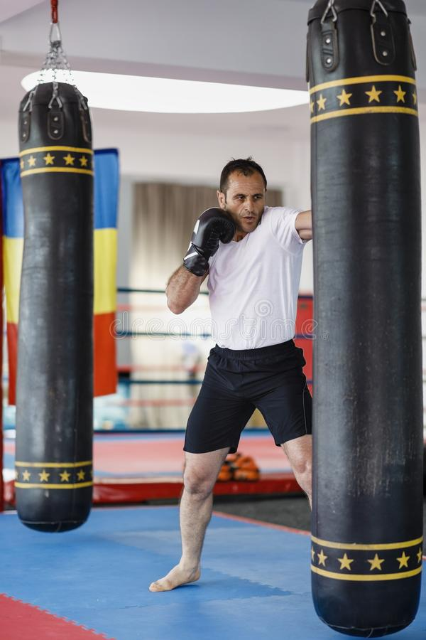 Kickbox fighter training in a gym with punch bags, see the whole royalty free stock image