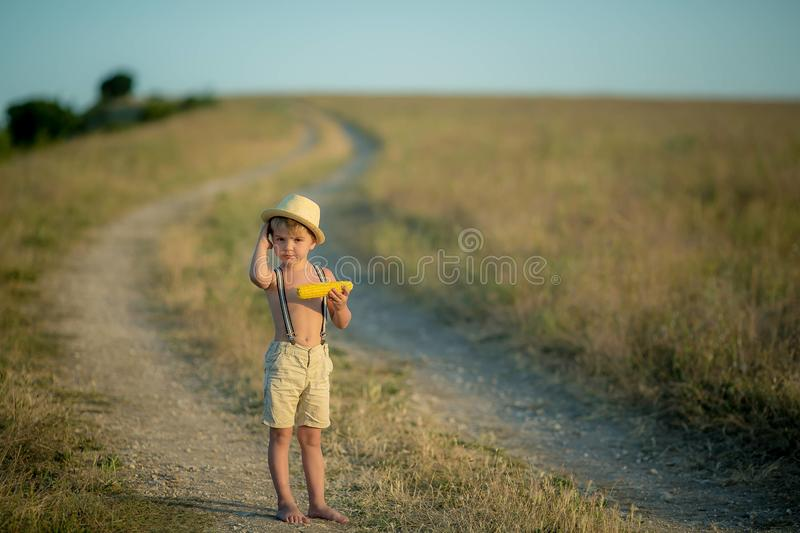 Kid boy holding and picking corn on farm in field, outdoors. Corn harvest. stock image