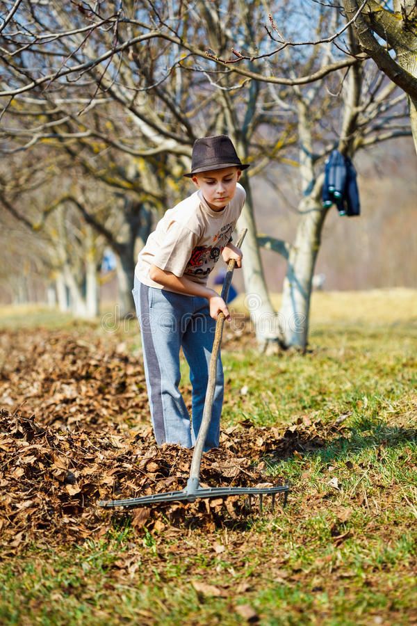 Kid cleaning in an walnut orchard royalty free stock images