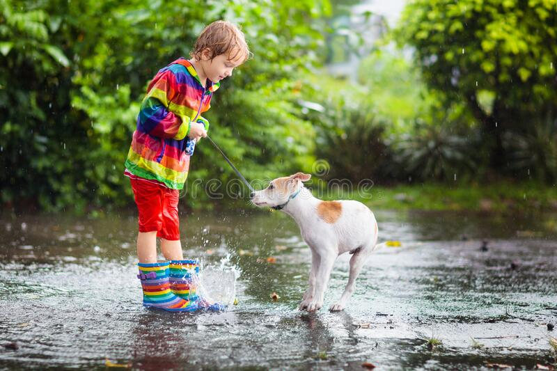 Kids in puddle in autumn rain. Waterproof wear stock photography