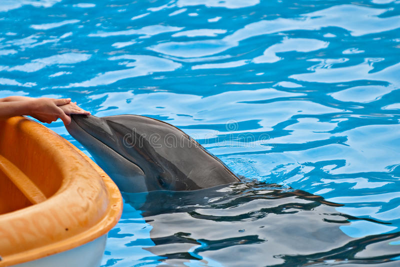 Download Kid and dolphin stock image. Image of fead, touch, hands - 24717023