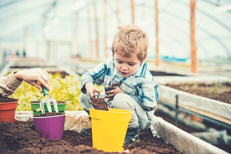 Kid filling yellow pot with soil, male hand holding hand fork. Blond kid playing in greenhouse. Educational game concept stock photography