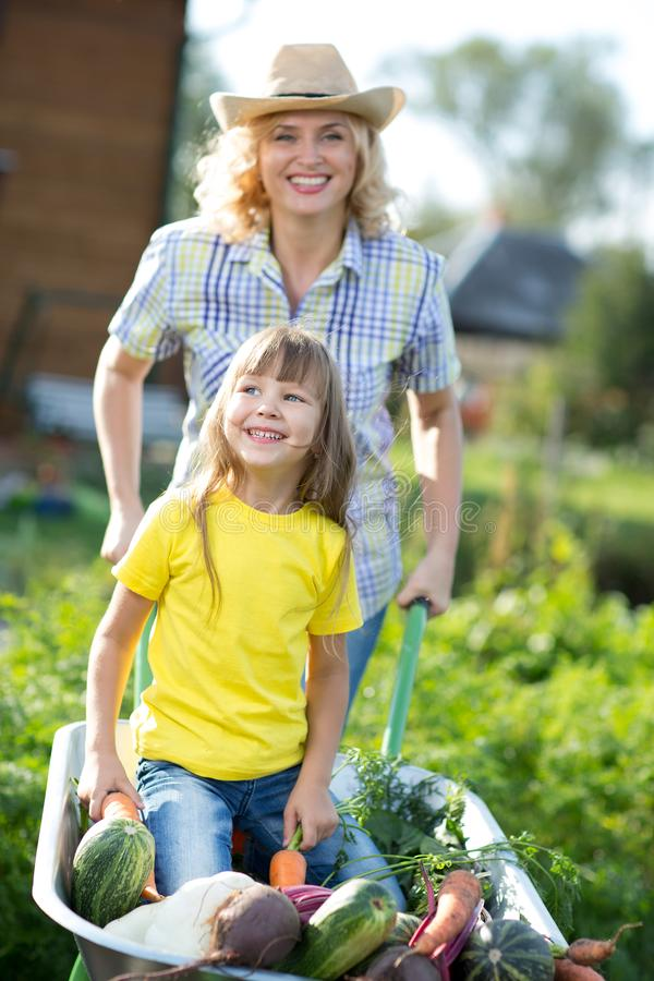Kid girl and mother in domestic garden. Happy child and mom push the wheelbarrow with harvest. Healthy organic royalty free stock photo