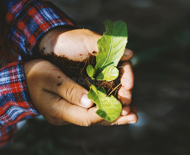 Kid Hands holding a young plant with sunlight. Ecology concept stock photo