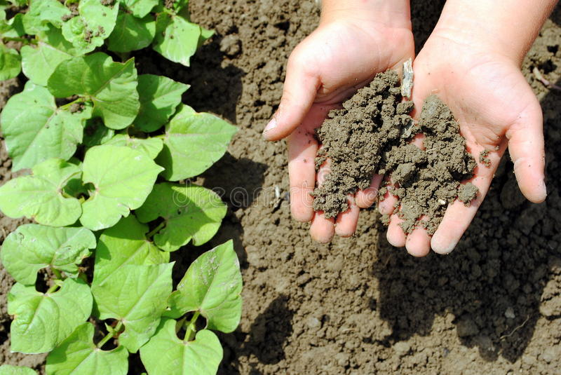 Kid hands with soil stock photo