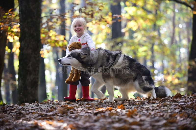 Kid with malamute and teddy bear on fresh air outdoor. Kid play with dog in autumn forest.  royalty free stock image