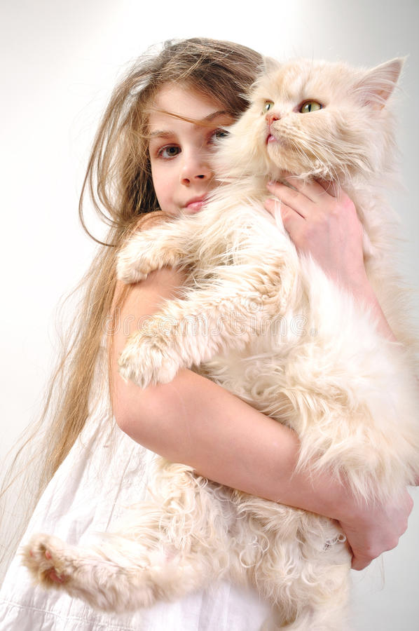 Kid with a Persian cat. Close-up portrait of a little girl holding her Persian breed kitten royalty free stock images