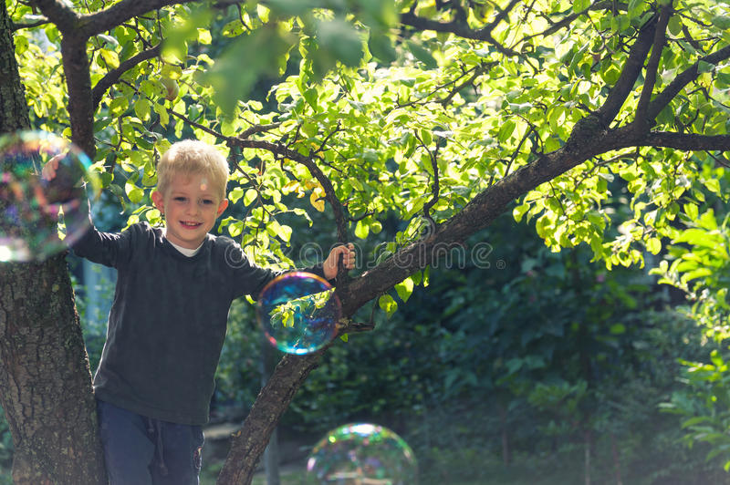 Kid playing in a tree. Small boy playing in a tree in the summer stock photos