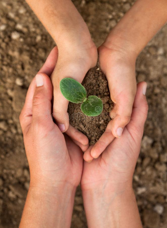 Kid`s and grown-up`s hands holding a young plant. New life. Parents and kids. Family. Love. Care, support and protection concept royalty free stock image