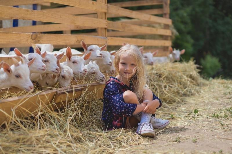 Kid sitting on hay near goats behind fences at farm and looking. At camera stock photo