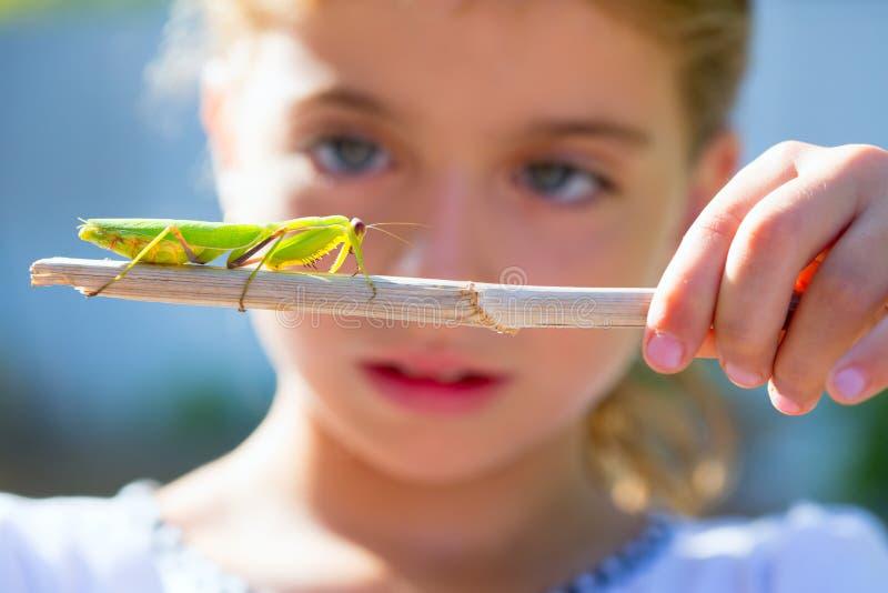 Kid small girl looking praying mantis stock photo