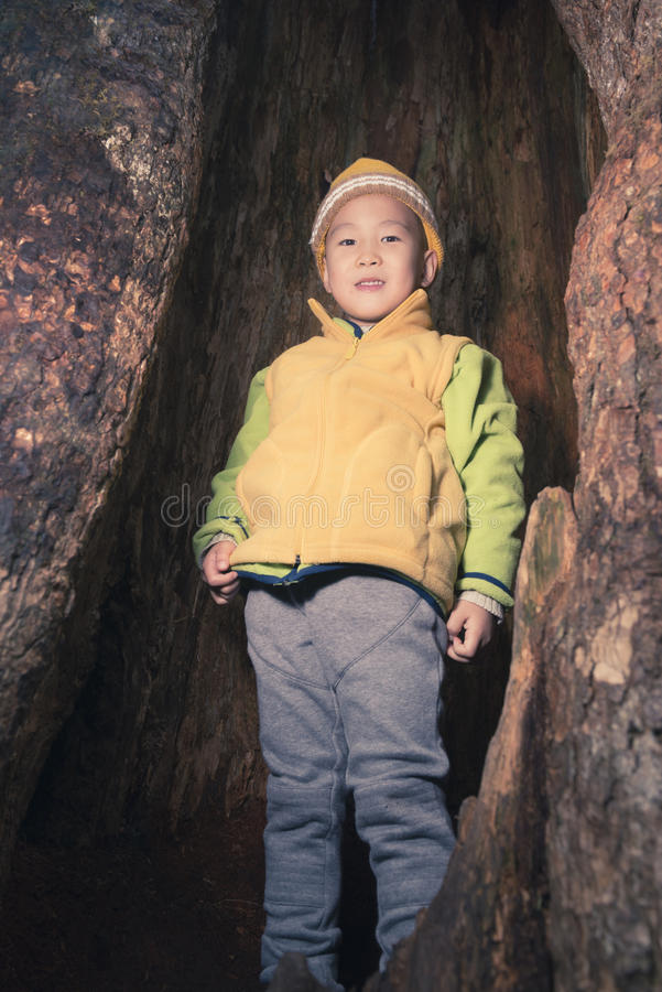Kid in tree hole royalty free stock image