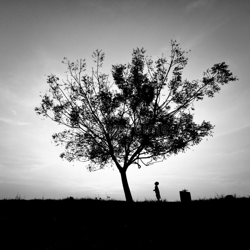Kid under the tree in black and white royalty free stock image