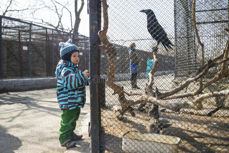Kid watches animals and birds at the zoo. Child looks at animals in the zoo.  stock images