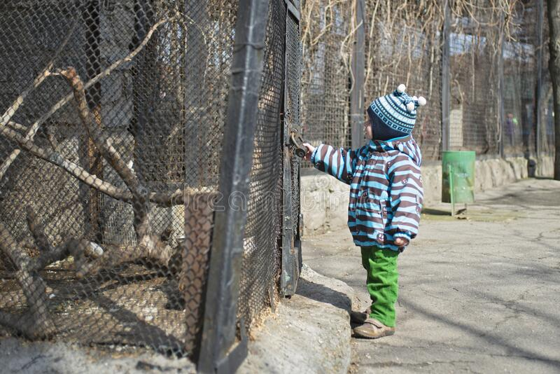 Kid watches animals and birds at the zoo. Child looks at animals in the zoo.  royalty free stock image
