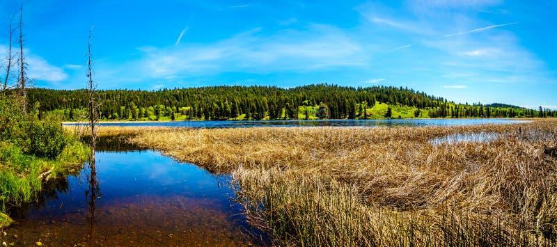 Kidd湖在不列颠哥伦比亚省,加拿大 库存照片