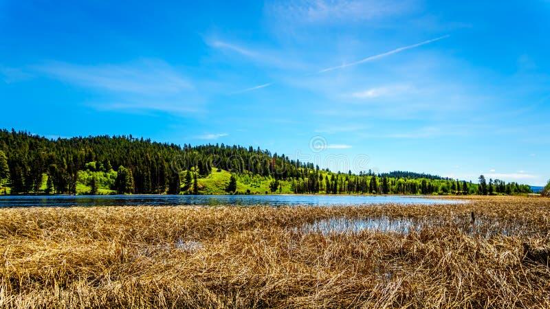 Kidd湖在不列颠哥伦比亚省,加拿大 免版税库存图片