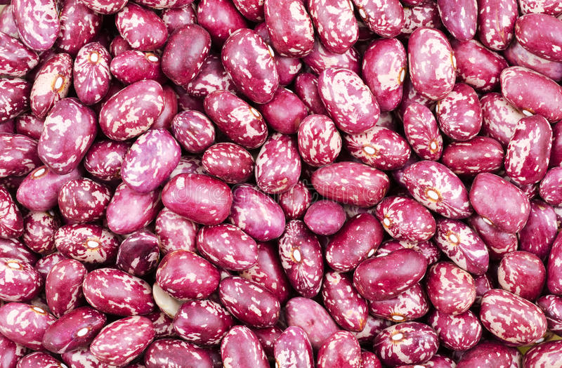 Download Kidney bean stock image. Image of grain, food, plant - 23582629