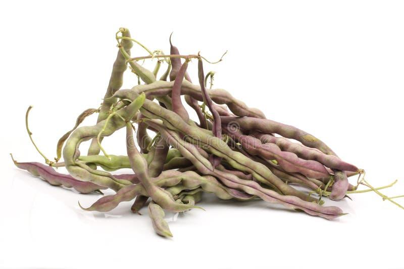Kidney bean. On white background stock photos