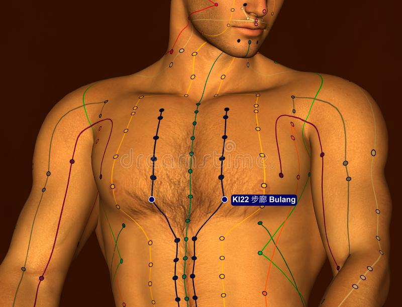 Acupuncture Point KI22 Bulang, 3D Illustration, Brown Background royalty free stock photography