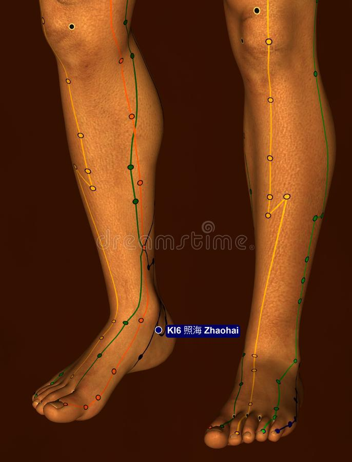 Acupuncture Point KI6 Zhaohai, 3D Illustration, Brown Background stock images