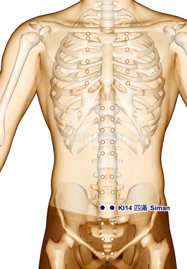 Acupuncture point Drawing KI14 Siman, 3D Illustration royalty free stock image