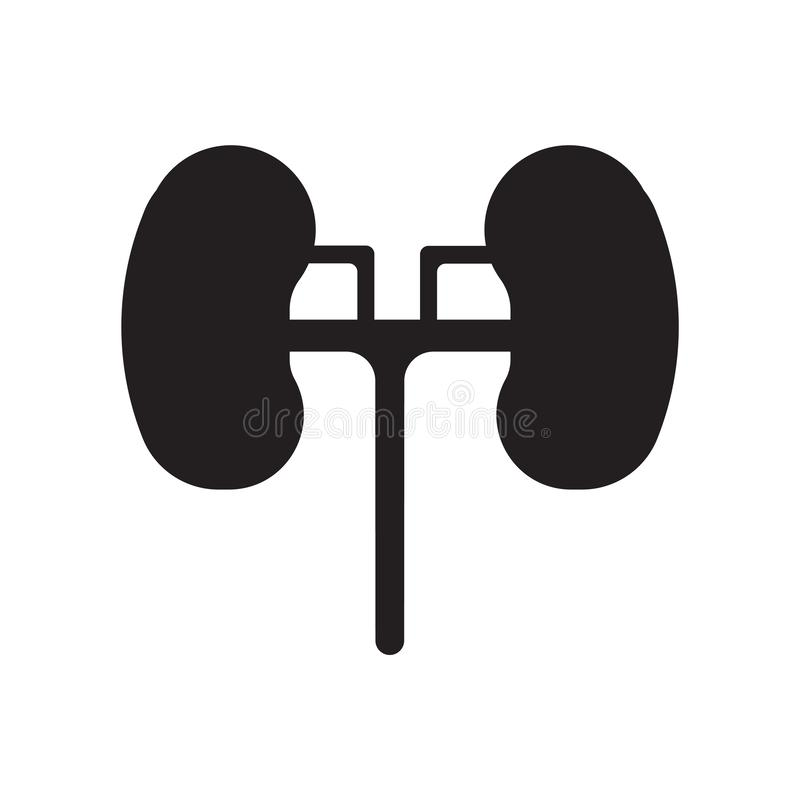 Kidneys icon vector isolated on white background, Kidneys sign , medical health symbols royalty free illustration