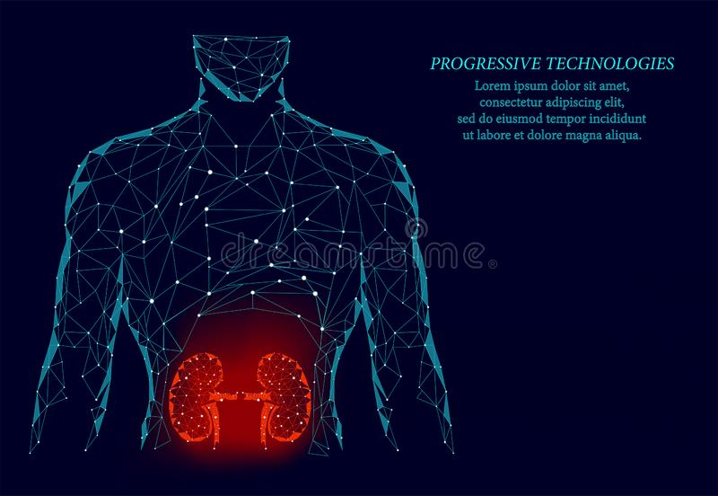 Kidneys internal organ men silhouette 3d geometric model. Urology system medicine treatment. Future science technology.Red. Triangles polygonal 3D render shape vector illustration