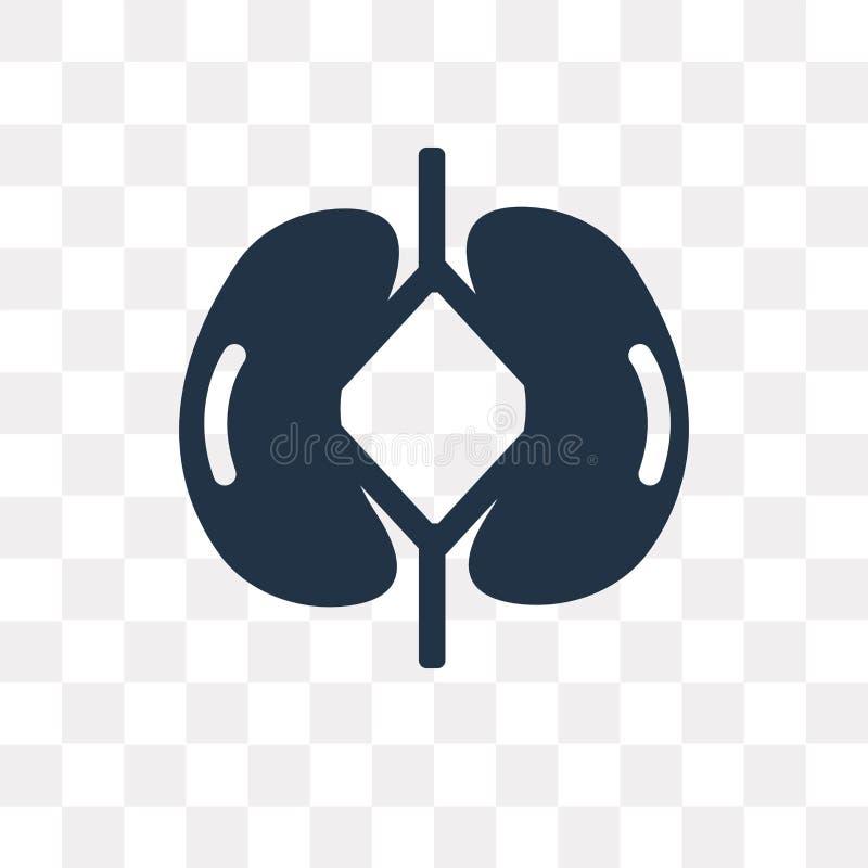 Kidneys vector icon isolated on transparent background, Kidneys stock illustration