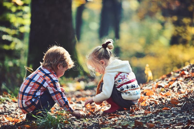 Kids activity and active rest. Children pick acorns from oak trees. Brother and sister camping in autumn forest. Little stock image