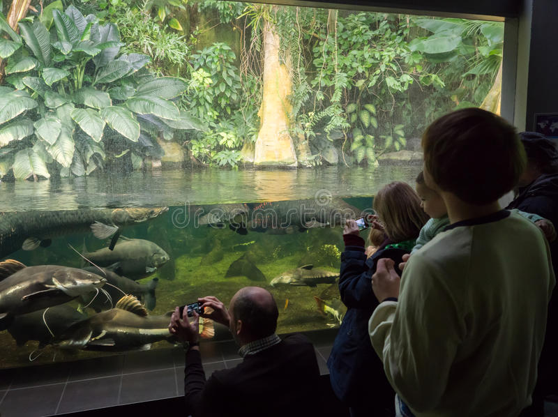 Kids in aquarium admire the fishes royalty free stock photography