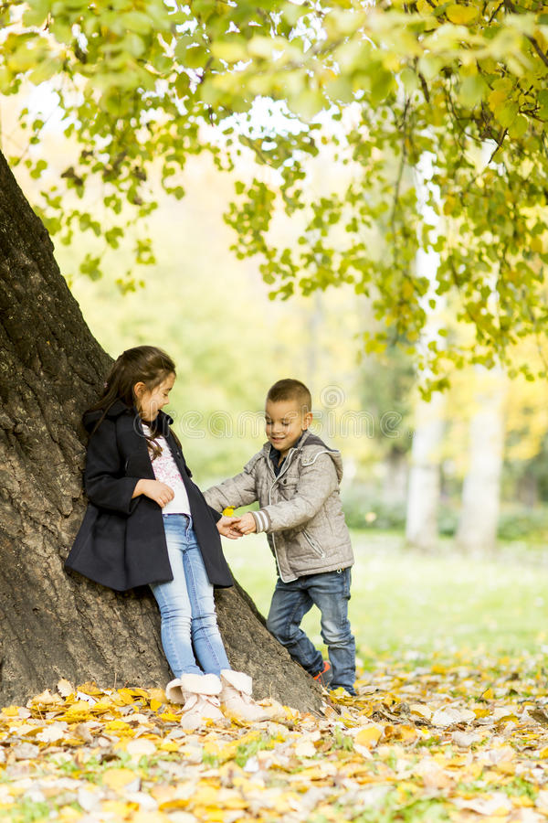 Kids in autumn park stock images