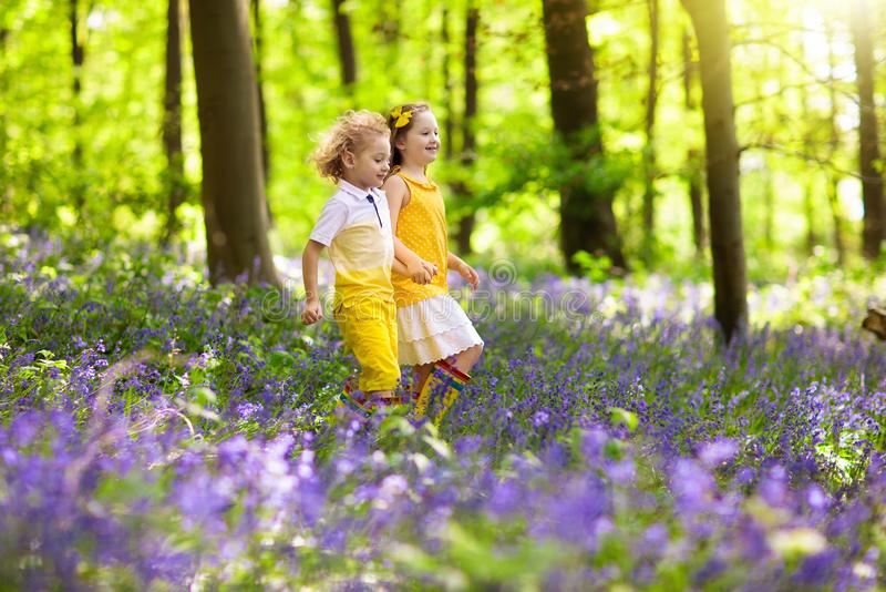 Kids in bluebell woods. Children play in park stock photography