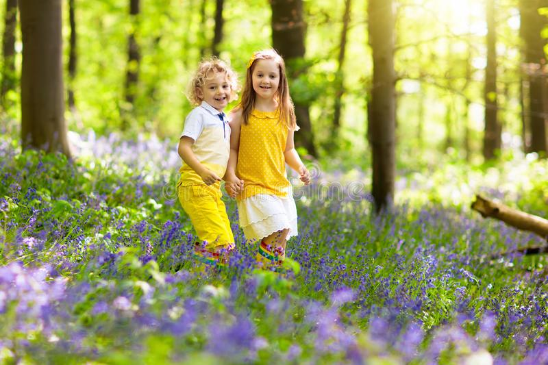 Kids in bluebell woods. Children play in park stock image