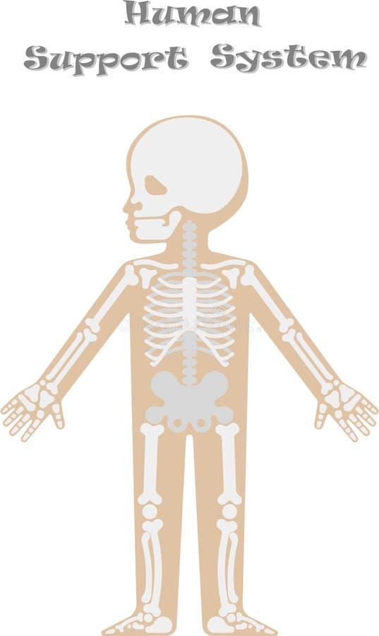 Kids body by X-ray stock vector. Illustration of roentgen - 90997067