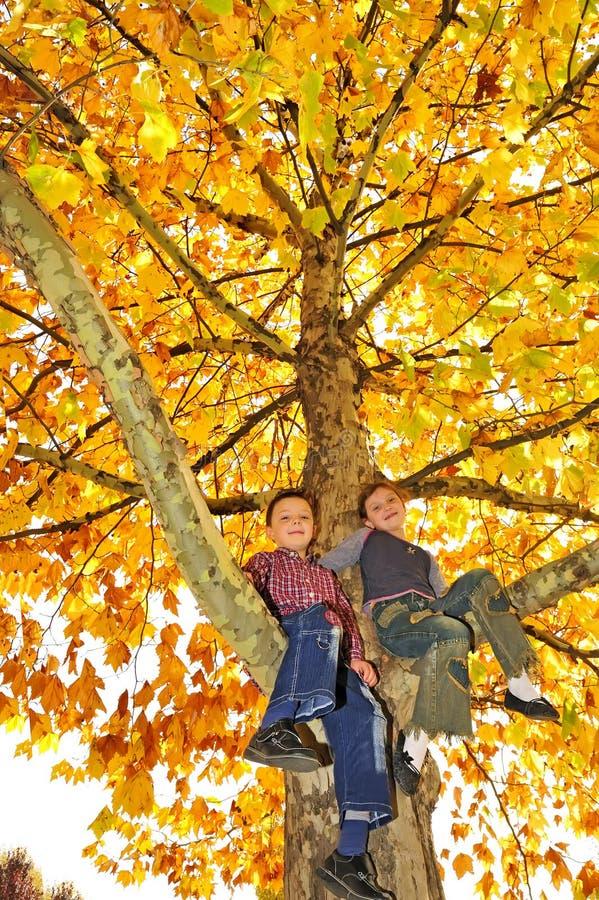 Kids climbed on tree royalty free stock photography