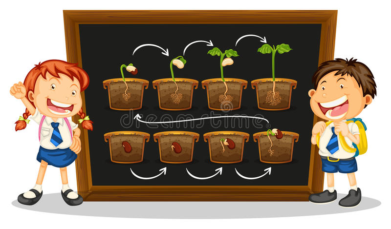 Kids and diagram of growing plant on board royalty free illustration