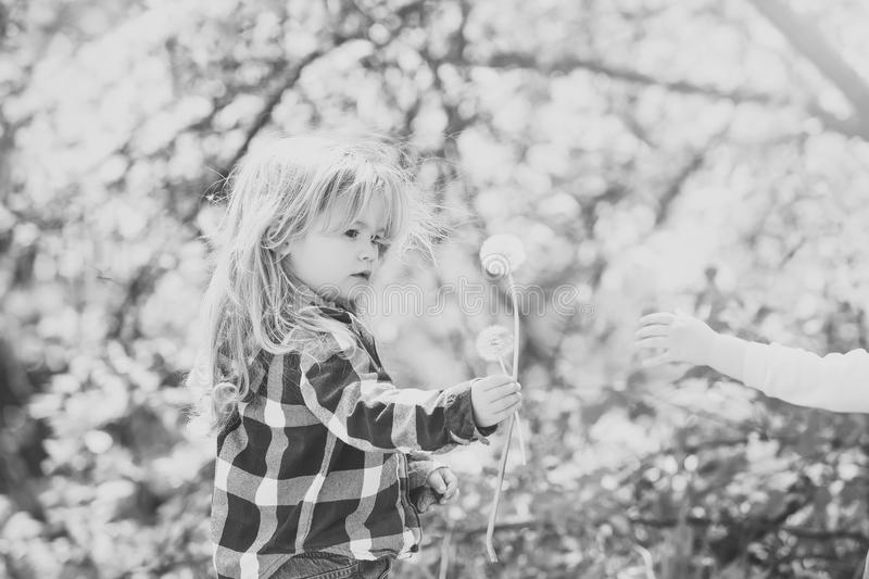 Kids enyoj happy day. Toddler give dandelion flower to child hand royalty free stock photo