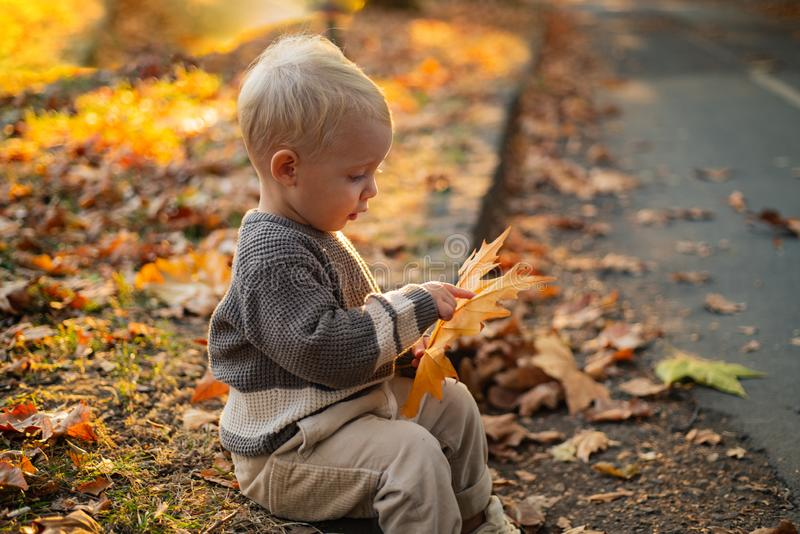 Kids fashion. Happy childhood. Childhood memories. Child autumn leaves background. Warm moments of autumn. Toddler boy stock images