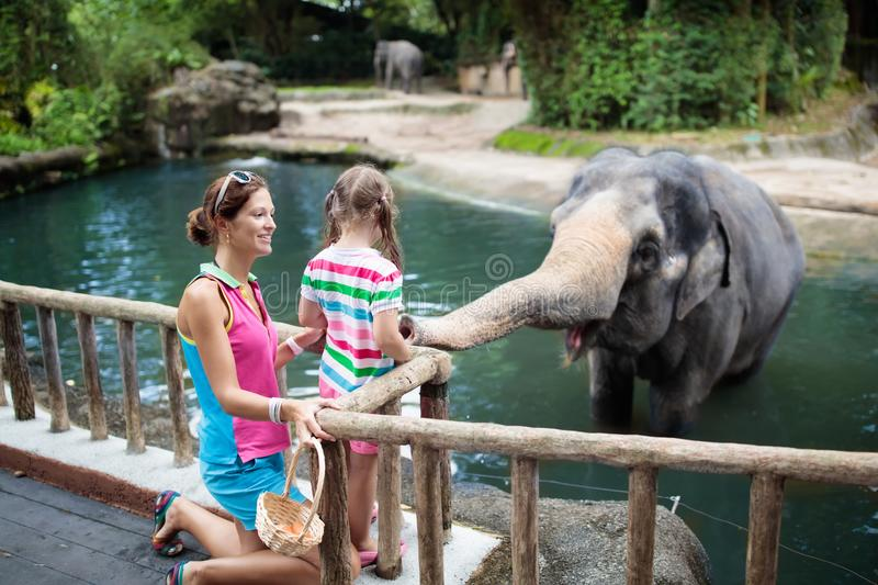 Kids feed elephant in zoo. Family at animal park. stock photo