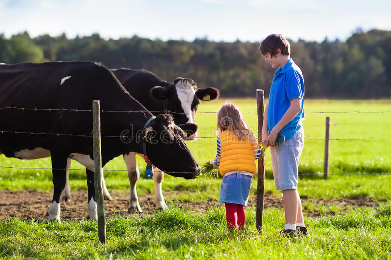 Kids feeding cow on a farm royalty free stock photography