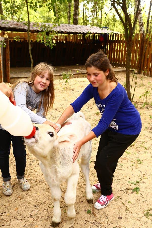 Kids Girl Feeding Baby Goat From Nipple Milk Bottle