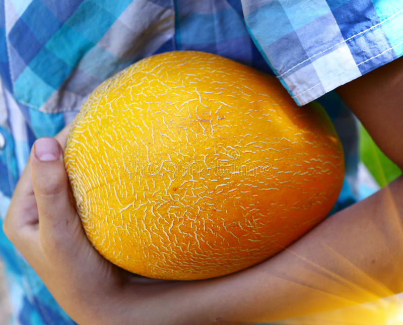Kids hand hold yellow melon close up royalty free stock photography