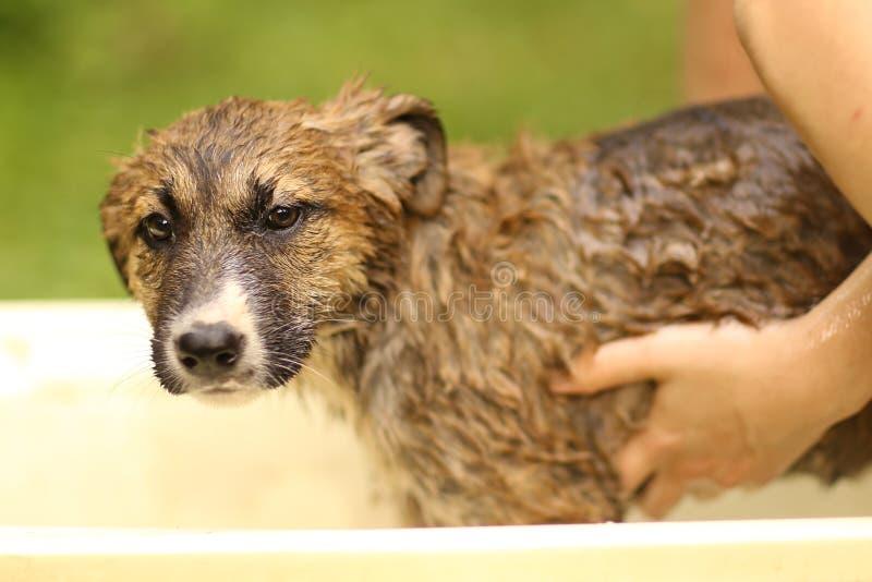 Kids hand wasing puppy in bathtub close up photo. On summer garden background stock images