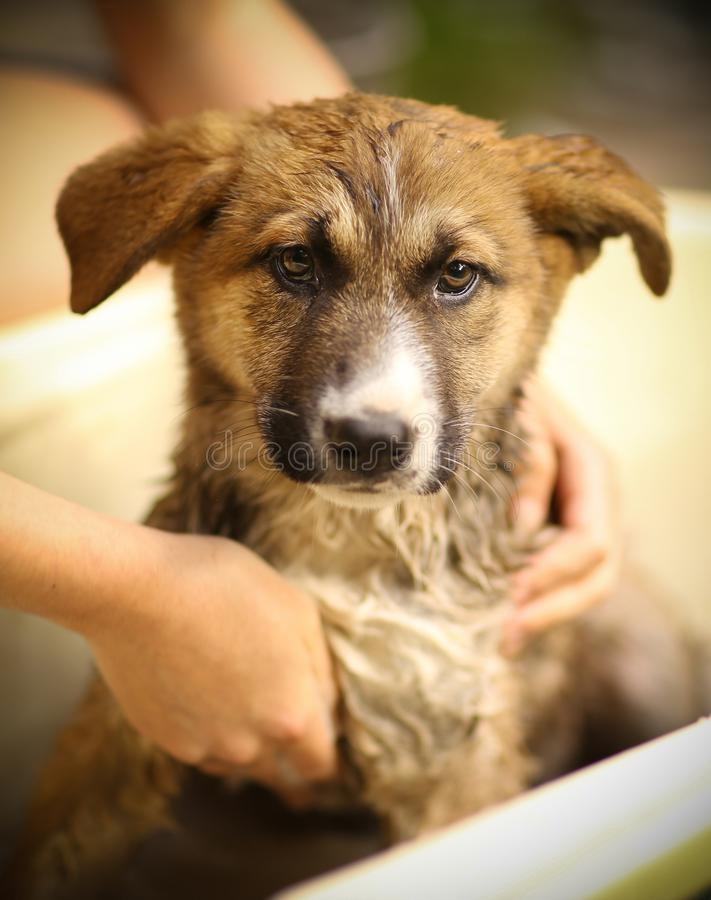 Kids hand wasing puppy in bathtub close up photo royalty free stock photography