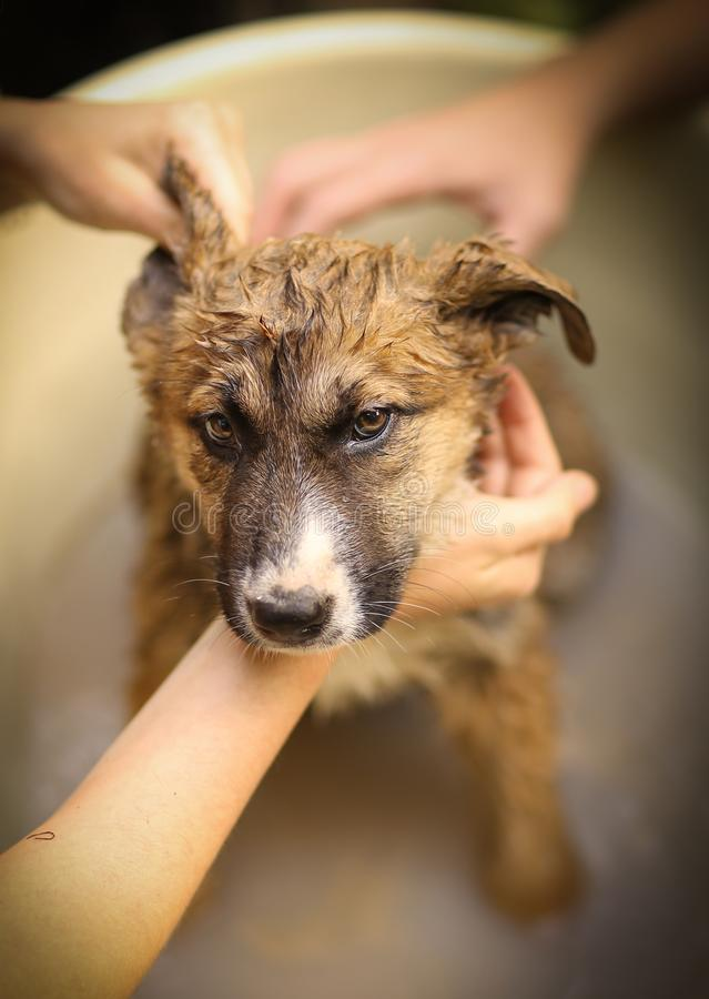 Kids hand wasing puppy in bathtub close up photo royalty free stock image