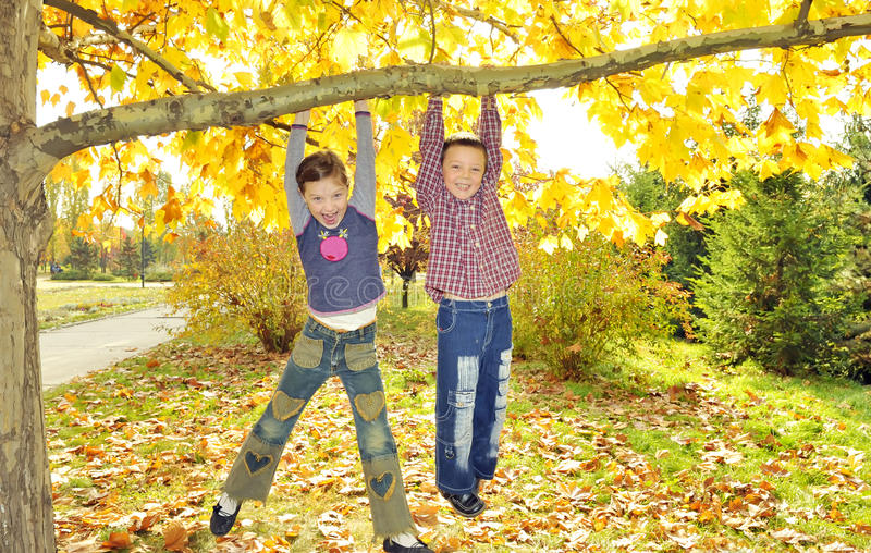 Download Kids Hanging From Branch Of Tree Stock Photo - Image: 26947386