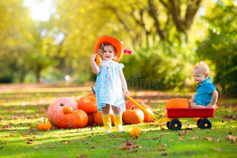 Kids having fun at pumpkin patch royalty free stock photos