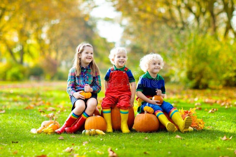 Kids having fun at pumpkin patch stock image