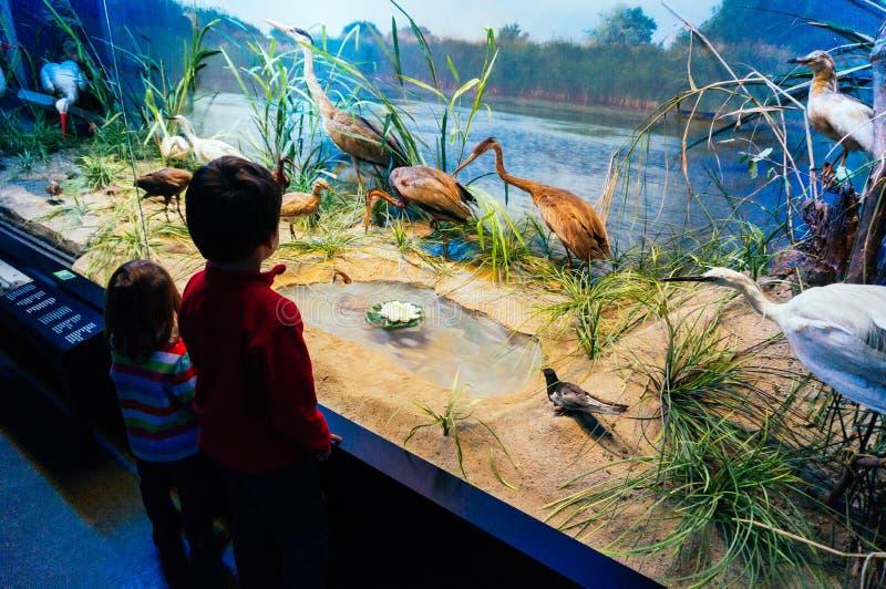 Kids at natural history museum stock image